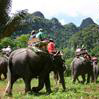 Full Day Elephant Safari & Rafting